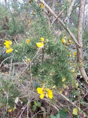 Premières fleurs de janvier